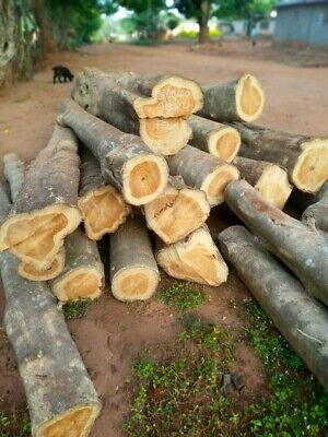 £50 • Buy Teak Logs Supply. Round Logs, Square Logs Or Sawn. Minimum 20ft Container
