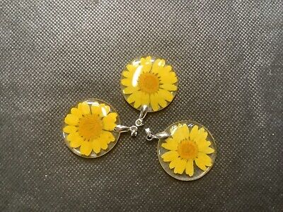 £2 • Buy 3 Round Real Flower Set In Resin Yellow Daisy Bargain Look!!!!