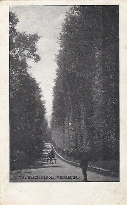 £3 • Buy Meikleour.  The Beech Hedge. Old  Printed Postcard. Some Back Damage. Used