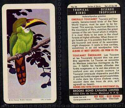 £0.99 • Buy Brooke Bond Canada, Tropical Birds 1964 VG (any From 25-48 List)
