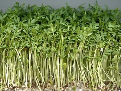 £1.29 • Buy Organic Sprouting Seeds Cress Curled / Common  40gm ~ 16000 Seeds