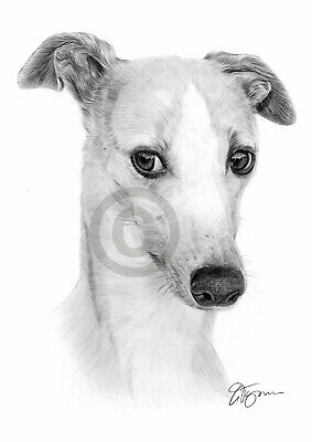WHIPPET Dog Pencil Drawing Art Print A4/A3 Signed Artwork By UK Artist • 8.99£