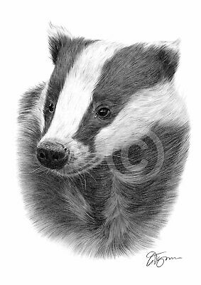 £8.99 • Buy European BADGER Pencil Drawing Print A3 / A4 Sizes Signed By Artist