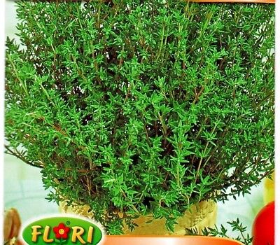 £1.49 • Buy Thyme - Thymus Officinalis - 3000 High Quality Herb Seeds /303
