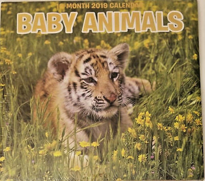 $6.99 • Buy 2019 Wall Calendar - Baby Animals -16 Month-12x22 Inches