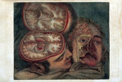$16 • Buy 1748 Antique Medical Poster Print Flayed HUMAN Head Face Really Bizarre Weird 36