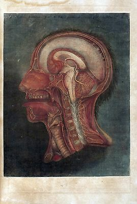 $16 • Buy 1748 Antique Medical Poster Print Flayed Dissected HUMAN Head Brain Skull 32