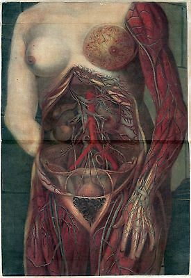 $16 • Buy 1748 Antique Medical Poster Print Flayed Dissected HUMAN Female Torso Arm 143