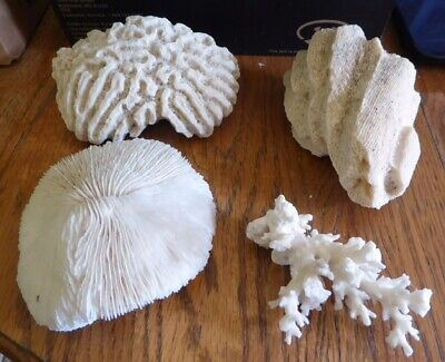 $59.99 • Buy Lot Of Coral -brain, Mushroom, 2 Others Sea Coral