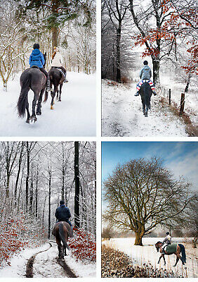 £7.99 • Buy Horse Christmas Cards - Pack Of 12 Xmas