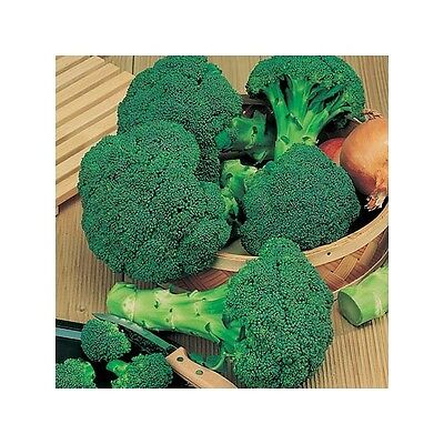 £1.29 • Buy Organic Broccoli Calabrese Green Sprouting  1000 Seeds