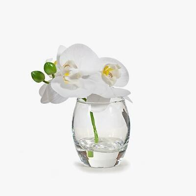 AU24 • Buy Orchid Phalaenopsis In Glass Vase With Faux Water