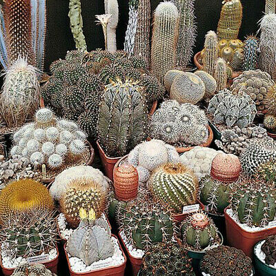 £1.99 • Buy Thompson & Morgan Cactus Special Mix Seeds 1 Packet Of 80 Easy To Grow Cacti