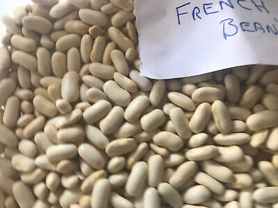 French Runner Beans - Seeds X10 - Plant May - Quick Sale • 4.99£