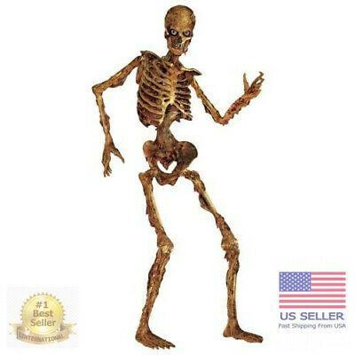 $21.24 • Buy 6 Ft Life Size Jointed Skeleton Halloween Party Haunted House Decoration Props