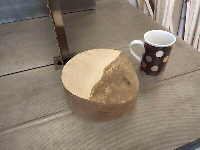 SYCAMORE 170mm X 77mm Woodturning Bowl Blank Hardwood Timber FEATURE • 14£