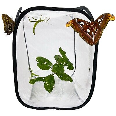 £6.99 • Buy Pop Up Net Insect Cage - For Butterflies, Moths, Stick Insects, Caterpillars
