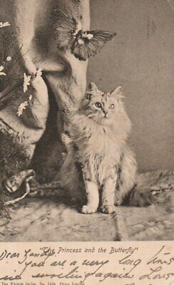 VINTAGE Postcard:  BEAUTIFUL CAT & BUTTERFLY • 1.59£