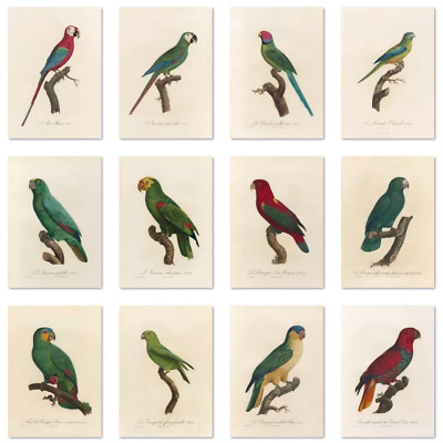 £2.49 • Buy Vintage Birds Parrot Macaw Amazon Lory Wall Art Poster Prints A4 A5 A6 Aged Look