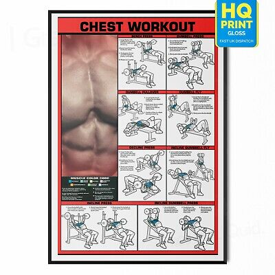 £4.99 • Buy Gym Workout All Body Poster Chest Exercise Print *laminated* | A5 A4 A3 A2 A1 |