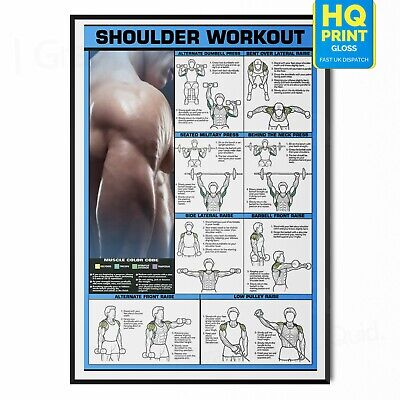 £8.99 • Buy GYM WORKOUT ALL BODY POSTER PRINT SHOUDLER Exercise | A5 A4 A3 A2 A1 |