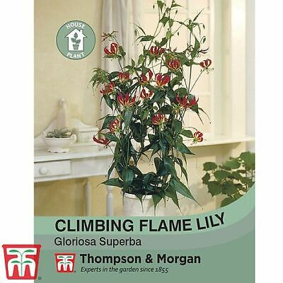 £2.99 • Buy Thompson & Morgan Climbing Flame Lily House Plant Seeds Tender Perennial Plant