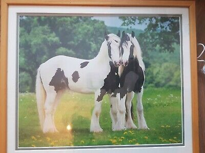 Shire Horse Photo. Framed Print Of Two Horses . Framed Picture Of Horses • 4.32£