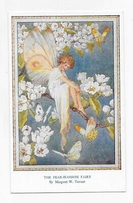 MEDICI THE PEAR BLOSSOM FAIRY BY MARGARET TARRANT Unposted Post Card #2247 • 7.20£