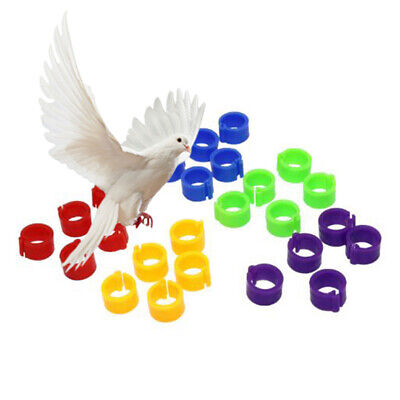 £2.51 • Buy 100pcs 8mm Pet Bird Rings Leg Bands For Parrot Finch Canary Poultry Rings