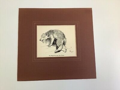 """£1.99 • Buy Vintage 1935 Cecil Aldin Print With Mount """"The Rough Fox In Guinea"""" 25 X 26 Cms"""