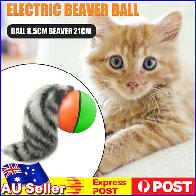 AU10.69 • Buy Pet Dog Cat Toy Electric Beaver Weasel Rolling Ball Chasing Toys Random