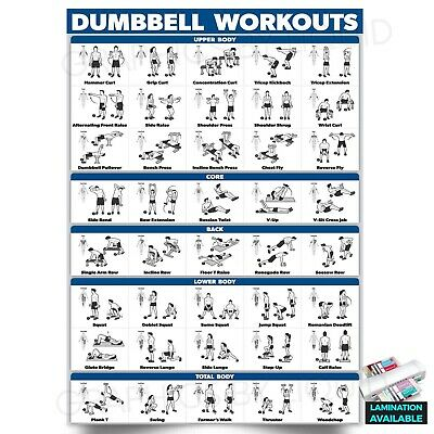 £2.99 • Buy Dumbbell Workout Fitness Training Chart Exercise Poster PRINT *LAMINATED*