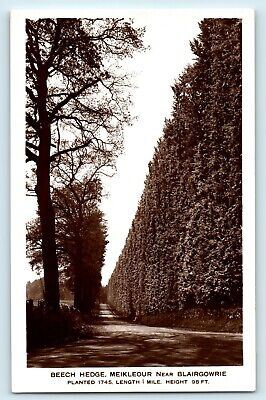 £0.99 • Buy Postcard Meikleour Beech Hedge Real Photograph Unposted