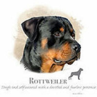 Rottweiler Robinson Pick Your Size T Shirt Youth Small-6 X Large • 9.96£