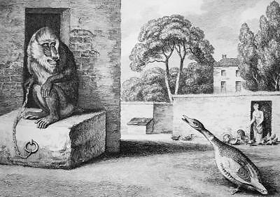 £16.98 • Buy AESOP FABLES Animals Baboon Monkey & Poultry - 1811 Original Etching Print