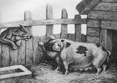 £23.46 • Buy AESOP FABLES Animals Sow Pig & Wolf - 1811 Original Etching Print