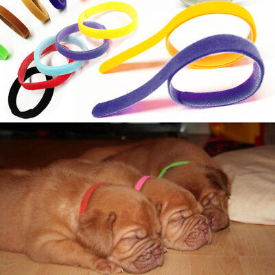 £3.99 • Buy UK New 12 Different Colours Dog Puppy Kitten Newborn Welping ID Bands Collar Set