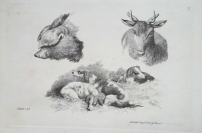 £18.49 • Buy 1801 ORIGINAL ETCHING Print By Howitt - Dogs Animals Head Of Fawn Wild Boar