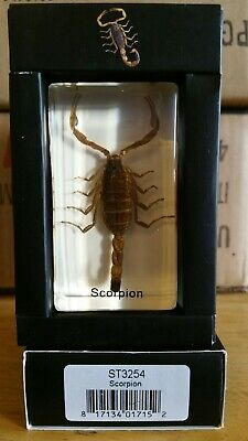 $12.99 • Buy Scorpion Real Insect PAPERWEIGHT Entomology Bug Taxidermy Resin MB91 Stocking St