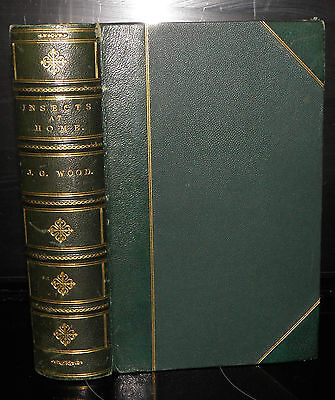 £50 • Buy **Insects At Home. Being A Popular Account Of British Insects-  J.G Wood, 1872