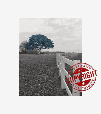 $16.99 • Buy Black White Blue Home Decor Treee Landcape Wall Art Matted Picture