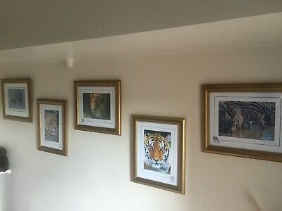 Stephen Gayford , Set Of 5 Framed Prints .. Used, Always Been On Bedroom Wall  • 170£