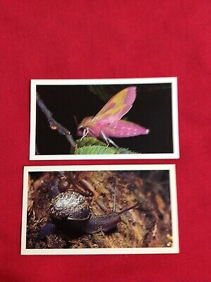 A Complete Set Cigar Cards .grandee Britain's Nocturnal Wildlife . Set Of 30... • 2.49£