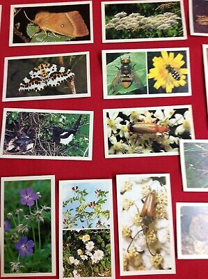 £2.49 • Buy Grandee Cigar Cards . Britain's Wayside Wildlife. Complete Collection Of 30cards