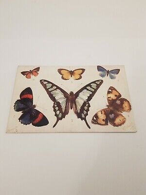 Tucks 9262 Butterfly Postcard.         L/903 • 2.75£