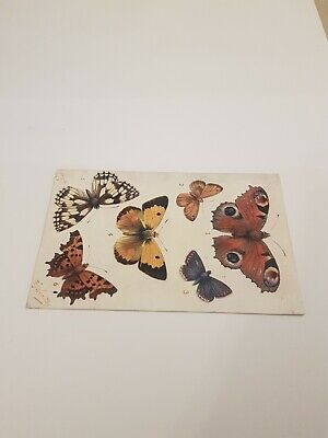 Tucks Butterfly Postcard.        L/905 • 2.75£