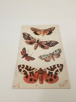 Tucks Butterfly Postcard.       L/906 • 2.75£