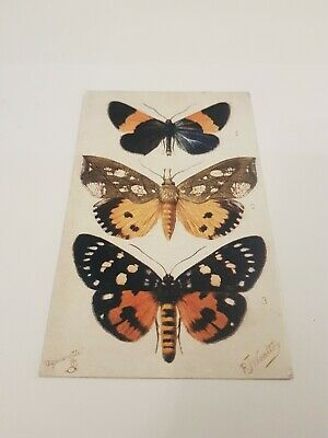 Tucks Butterfly Postcard.  L/907 • 2.75£
