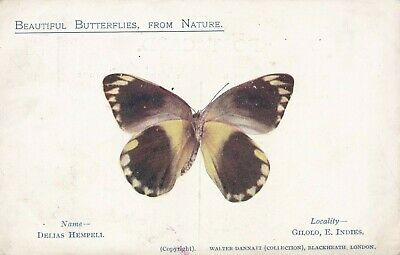 Old Postcard Tropical Butterfly Walter Dannatt Sc524 • 2.29£
