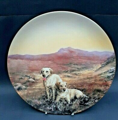 Coalport Sporting Dogs Collectors Plates. The Yellow Labrador Ltd Edit • 9£